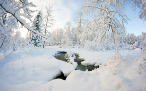 hiver, forêt, petite rivière, neige, arbres, nature