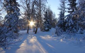 Wald, Winter, Bäume, Schnee, Natur