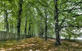 парк, дорога, забор, деревья, пейзаж