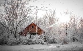 winter, trees, cabin, landscape