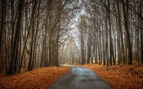 forest, autumn, trees, road, landscape