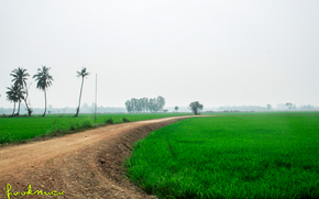 Thailandia, campo, cultura