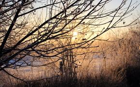 inverno, alberi, nevicata, natura, villaggio, sole, chiaro, FILIALE, gelo, gelo, salire, tramonto, mattinata, steccato