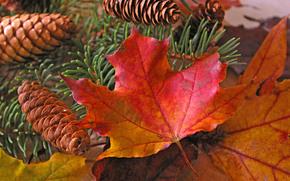autunno, ramo, fogliame, Coni