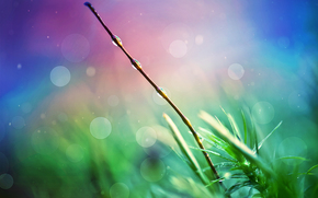 rama, gotas, plantas, hierba, Macro
