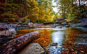 río, bosque, piedras, árboles, naturaleza