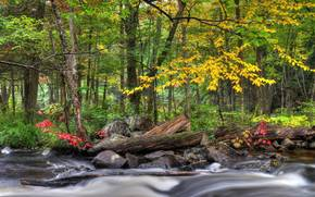 river, forest, trees, nature, autumn