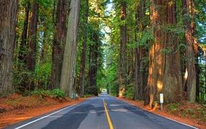 foresta, alberi, stradale, paesaggio