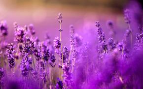 Macro, nature, Flowers, Widescreen