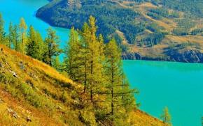 река, лес, деревья, холмы, пейзаж