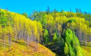 jesień, Hills, drzew, krajobraz
