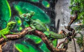 jurassic park, Iguana, х