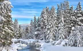 inverno, rio, floresta, árvores, neve, paisagem