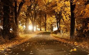 otoño, carretera, bosque, árboles, paisaje