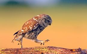 pájaro, búho, gira, pasos, tablero, árbol, TEXTURA, fondo