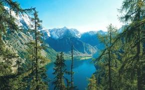 natura, foresta, paesaggio, lago, estate, cielo