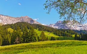 伯尔尼高原, 瑞士, 山, 丘陵, 家, 树, 景观