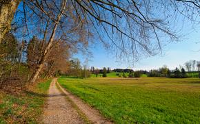 场, 树, 道路, 景观