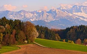 山, 场, 道路, 树, 景观