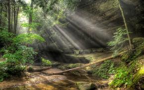 森林, 树, 岩石, 石头, 潆, 溪, 阳光, 性质