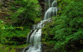 森, 木, 滝, 岩, 池, 自然