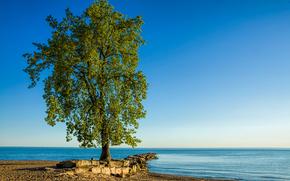Lake Erie, tree, Huntington Beach, landscape, Lone Tree