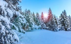 foresta, inverno, abete rosso, alberi, nevicata, natura