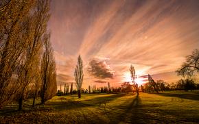 zachód słońca, pole, drzew, krajobraz
