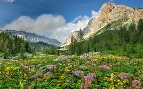 Alps, Mountains, mountain meadows, trees, Flowers, landscape