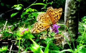 性质, 蝴蝶, 森林, 花