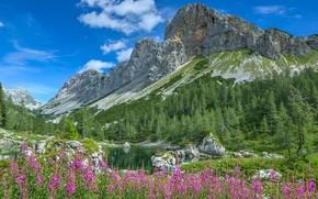 Fiori, prati di montagna, Alpi, Montagne, alberi, paesaggio