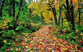 осень, лес, деревья, дорога, пейзаж