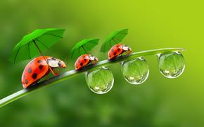 blade, dew, drops, ladybugs, Umbrellas, Macro