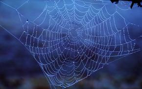 web, gocce, Macro