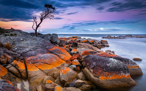 sea, shore, stones, Rocks, tree, Tasmania, australia, sunset, landscape