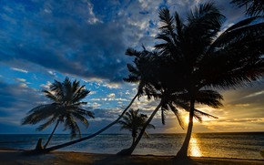 日落, 海, 岸, 棕榈, 景观