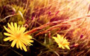 花卉, 草, 宏