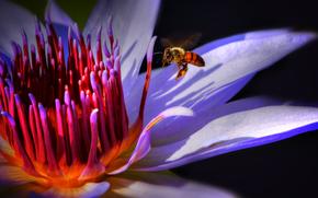 lily, flower, bee, Macro