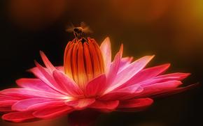 fiore, ape, Macro
