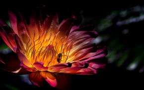 花, 蜜蜂, 宏