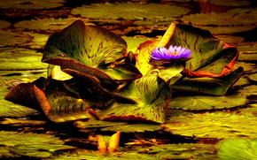 pond, fogliame, fiore, Giglio