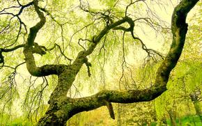 parc, arbre, nature