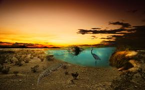 日落, 池塘, 苍鹭, 鳄鱼, Photoshop中