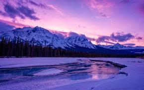 Parco nazionale Jasper, Fiume Athabasca, Montagne, fiume, alberi, paesaggio