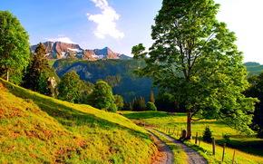 Montagne, stradale, alberi, paesaggio