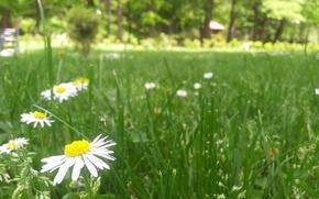 florete, flor, belleza, paisaje, Belleza