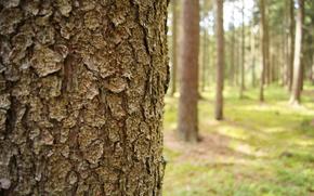 tree, Baum, Tree