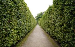 corridor, tunnel, maze