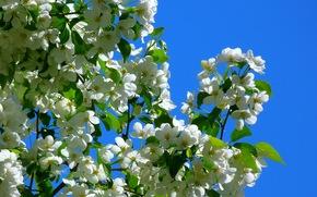 SPRING, flowering, light