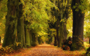 деревья, дорога, осень, пейзаж